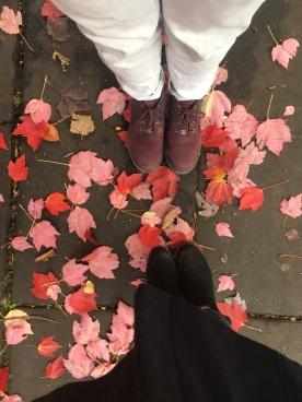 Beautiful pink leaves everywhere
